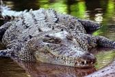 Cứu người bị cá sấu vây khốn 2 tuần