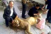 Người Syria xẻ thịt sư tử sở thú ăn chống đói?