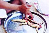 Rắn mối, món ăn sành điệu xứ vườn Nam Bộ