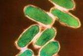 Thay đổi khí hậu làm tăng bệnh dịch hạch