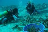 Các dải san hô tái sinh kỳ diệu sau sóng thần