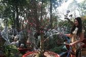 Đào Nhật Tân có giá đến 15 triệu đồng/gốc