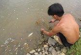 Cá chết hàng loạt trên sông Bồng Miêu do Cyanua?