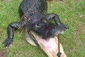 Chàng sinh viên câu được cá sấu khổng lồ
