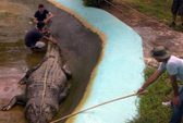 Philippines tuyên bố bắt được cá sấu lớn nhất thế giới