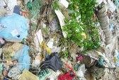 Vịnh Nha Trang bị ô nhiễm