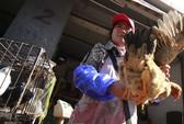 Phát hiện chủng virus cúm gia cầm mới H7N7