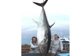 Bắt được cá ngừ vây xanh gần nửa tấn