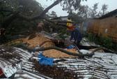 Bão Bopha tấn công Philippines, 238 người chết