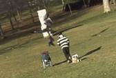 Đại bàng lao xuống bãi cỏ quắp em bé đang chơi đùa