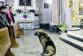 Chú chó vẫn đều đặn đi lễ nhà thờ sau khi cô chủ mất