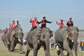 Bật mí nghề nuôi voi