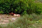 """Nữ sinh lớp 12 bị sát hại dã man sau khi """"quan hệ"""""""