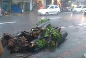 Hà Nội: Tử vong vì tông thẳng vào cây xà cừ đổ