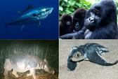 10 loài động vật có nguy cơ tuyệt chủng năm 2012