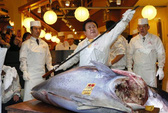 Cá ngừ vây xanh giá kỉ lục 36 tỉ đồng
