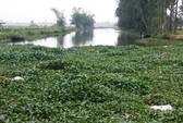 Thanh Hóa: Lợn chết trôi đầy sông