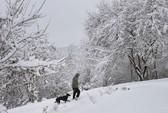 Mỹ: Bão tuyết tấn công thủ đô Washington D.C