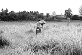 Bi kịch nông dân hết ruộng