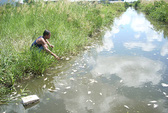 Sông Cà Mau thoi thóp
