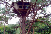Đi Đà Lạt, ngủ trên cây