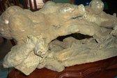Độc đáo lá cây hóa thạch