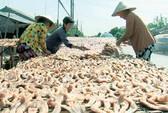 Về Tam Nông ăn khô cá lóc