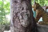 """Sự thật về """"Phật hiện hình trên gốc cây"""""""