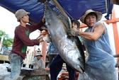 Kiếm tiền tỷ từ cá ngừ đại dương