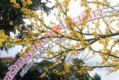 Chiêm ngưỡng đường hoa Xuân Bạch Đằng - Đà Nẵng