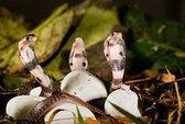 Năm Tỵ về vương quốc những loài rắn