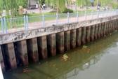 Cá nổi trên kênh Nhiêu Lộc