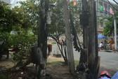 Cháy cáp viễn thông ở Tiền Giang