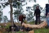 Đà Lạt: Phát hiện xác người chết cháy trên đồi thông