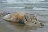 Phát hiện thi thể không đầu trôi dạt trên biển
