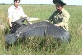 Thả chim già đãy về Vườn Quốc gia Tràm Chim