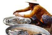 Chợ quê mùa nước nổi