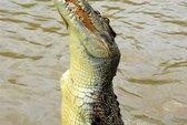 Bắt được cá sấu dưới ruộng lúa