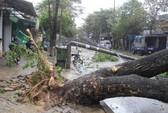 Đà Nẵng, Quảng Nam tan hoang, đã có 4 người chết