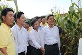 Bắp biến đổi gien tại Việt Nam: An toàn