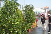 TPHCM: Khai mạc 68 chợ hoa Tết