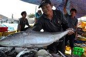 Hành vi cản trở ngư dân Việt Nam của tàu Trung Quốc rất nghiêm trọng!