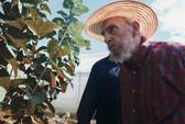 Ông Fidel Castro lại được đề cử vào quốc hội Cuba