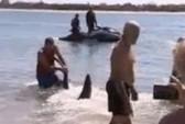 Bắt cá mập bằng tay không