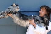 Mèo dài nhất thế giới qua đời vì ung thư
