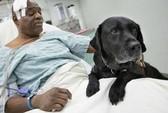 Chó nhảy xuống đường ray cứu người chủ mù