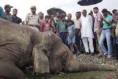 Tàu hỏa tông chết 4 con voi tại Ấn Độ