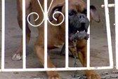 Chó cắn chết bé trai, chủ bị truy cứu trách nhiệm hình sự