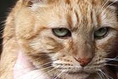 Chó hiến máu cứu mèo bị ngộ độc thịt chuột