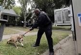 Mỹ: Bùng nổ chó hoang tại thành phố Detroit